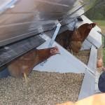 Ersten Hühnermobil in Hessen