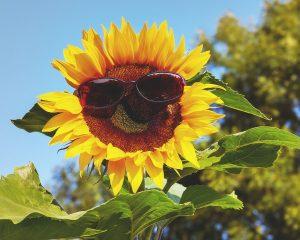Arbeitsschutzmaßnahmen bei Sommerhitze