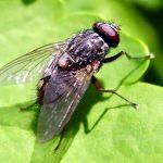 Was sind eigentlich Insekten?