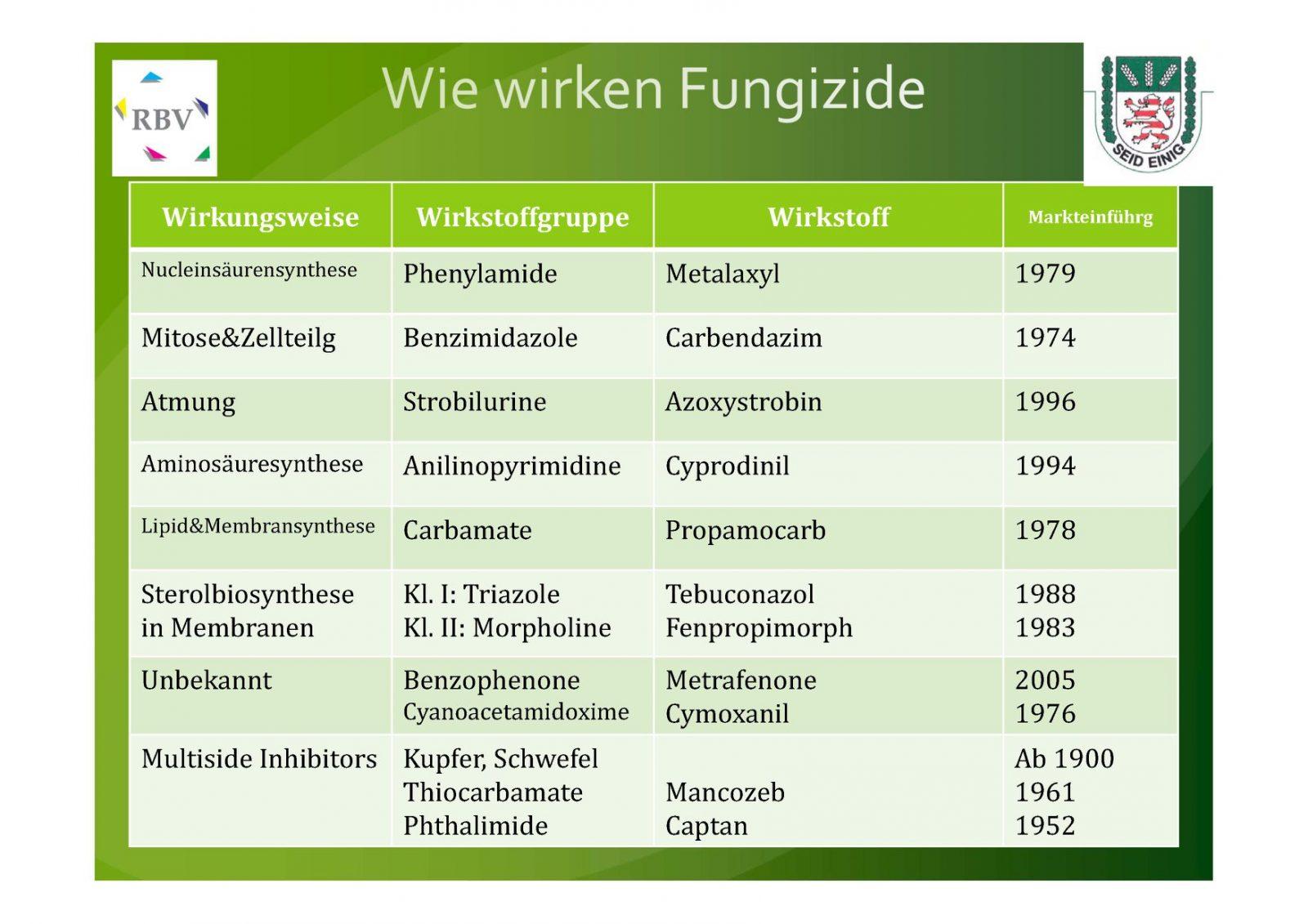 """Phytophthora, ein falscher Mehltaupilz (""""downey mildew"""")"""