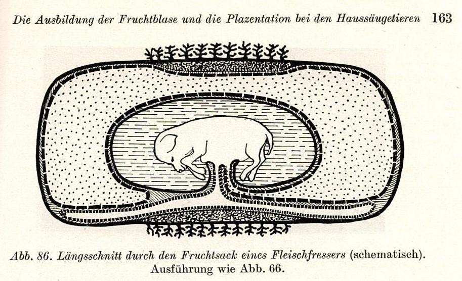 Kennt ihr noch die verschiedenen Plazentatypen unserer Haustiere?