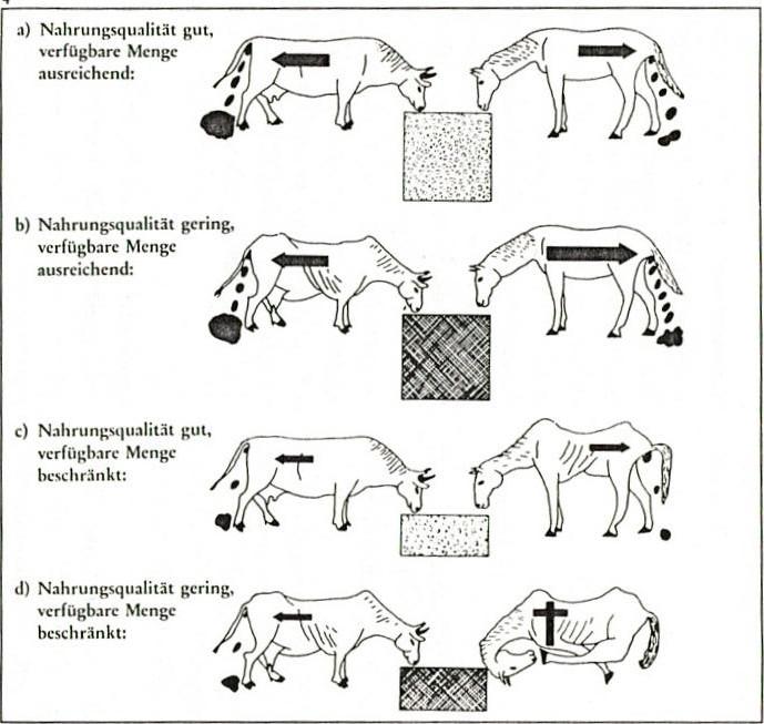 Die Verwertung von Zellulose mit Hilfe bakterieller Symbiose